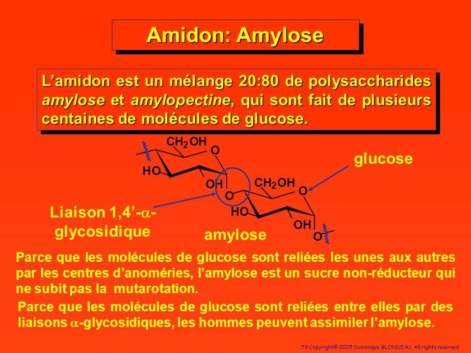 79 Copyright© 2005 Dominique BLONDEAU. All rights reserved H 2 OH OH C O HO O HO O C OH O H 2 OH Lamidon est un mélange 20:80 de polysaccharides amylo