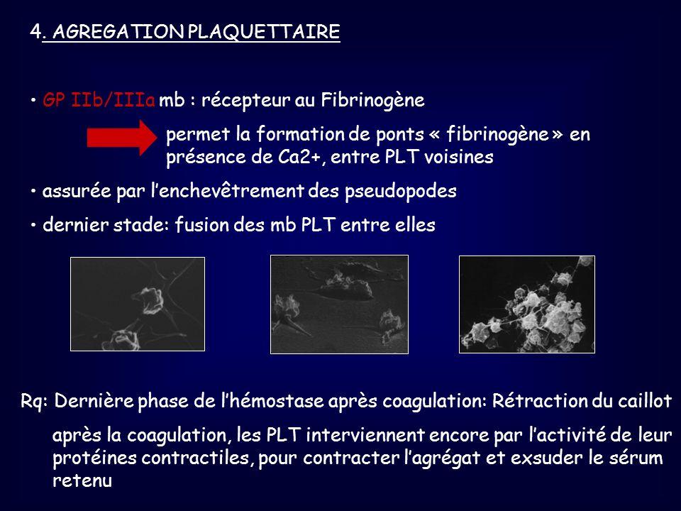 4. AGREGATION PLAQUETTAIRE GP IIb/IIIa mb : récepteur au Fibrinogène permet la formation de ponts « fibrinogène » en présence de Ca2+, entre PLT voisi