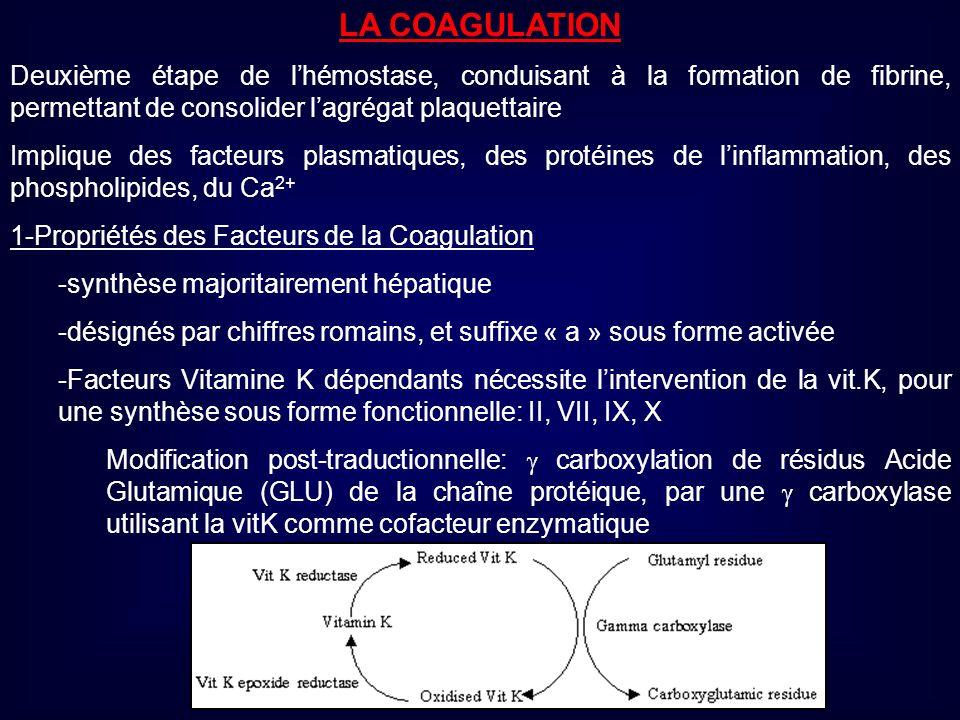 LA COAGULATION Deuxième étape de lhémostase, conduisant à la formation de fibrine, permettant de consolider lagrégat plaquettaire Implique des facteur