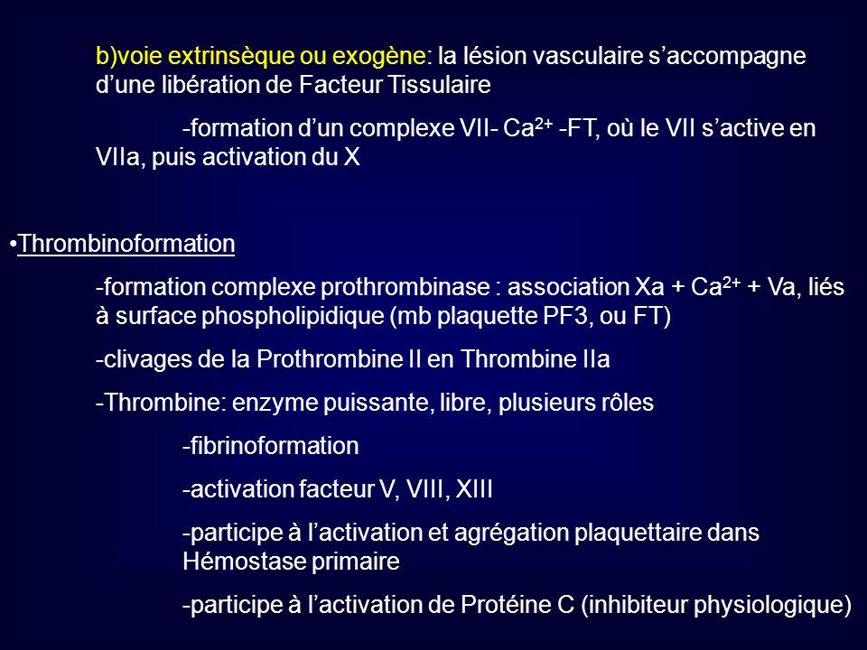 b)voie extrinsèque ou exogène: la lésion vasculaire saccompagne dune libération de Facteur Tissulaire -formation dun complexe VII- Ca 2+ -FT, où le VI