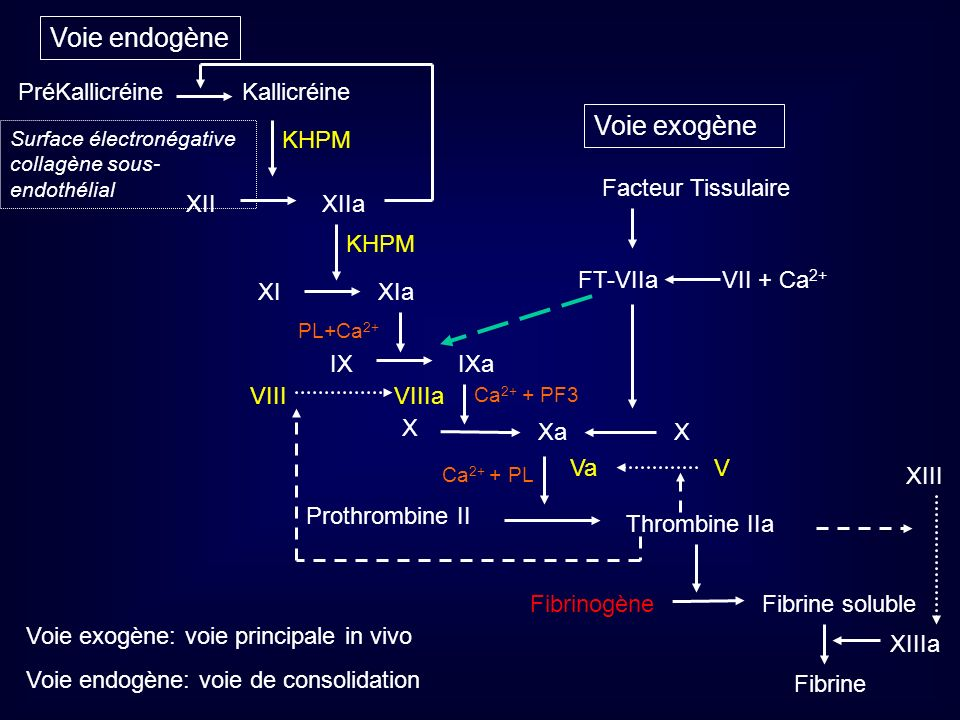 Voie exogène Voie endogène IXaIX PL+Ca 2+ Facteur Tissulaire VII + Ca 2+ FT-VIIa X Thrombine IIa Prothrombine II Va Ca 2+ + PL Xa X VIIIa Ca 2+ + PF3