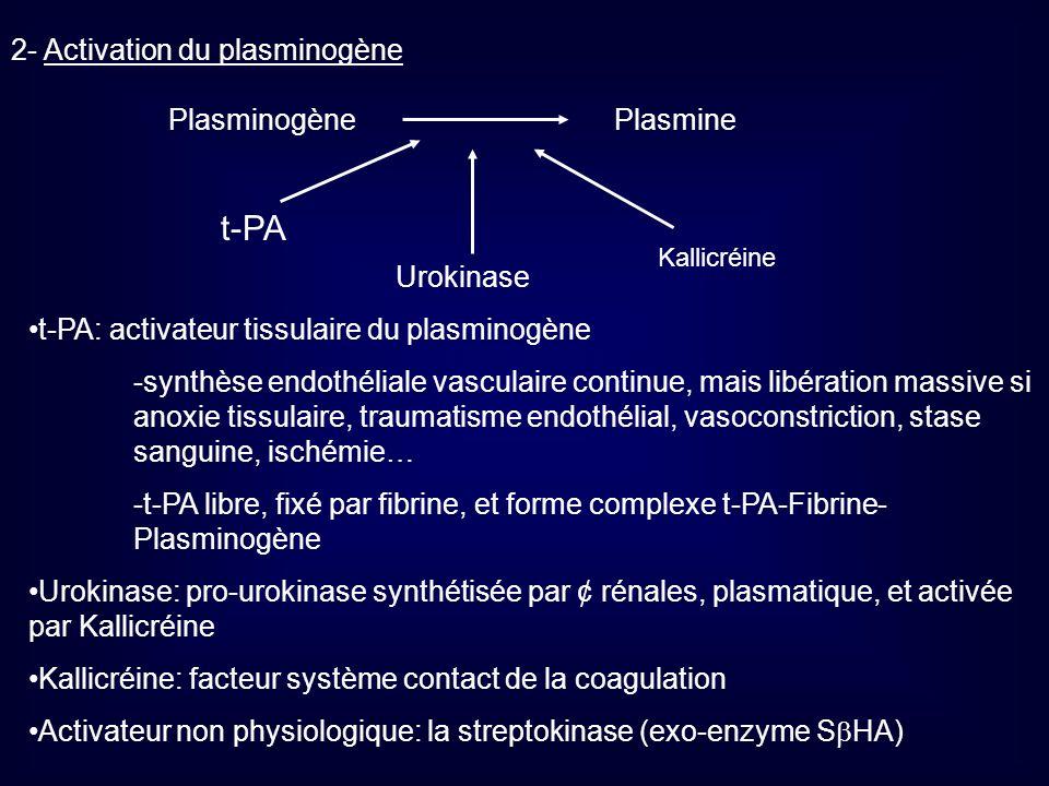2- Activation du plasminogène PlasminogènePlasmine t-PA Urokinase Kallicréine t-PA: activateur tissulaire du plasminogène -synthèse endothéliale vascu