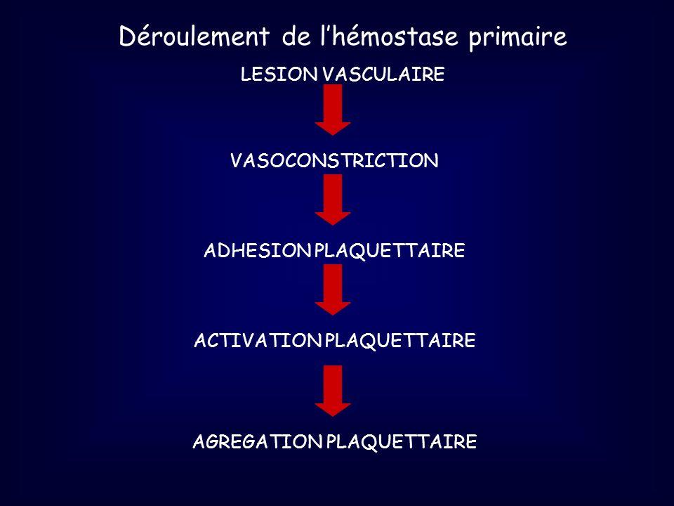 Déroulement de lhémostase primaire LESION VASCULAIRE ACTIVATION PLAQUETTAIREADHESION PLAQUETTAIREVASOCONSTRICTIONAGREGATION PLAQUETTAIRE