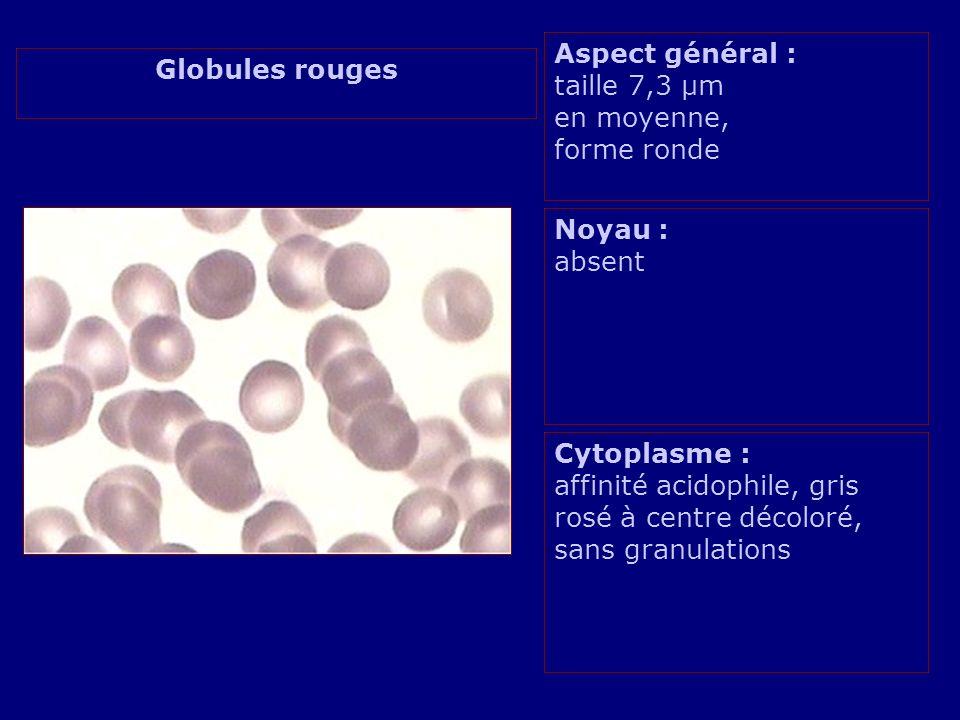 Aspect général : taille 7,3 µm en moyenne, forme ronde Noyau : absent Cytoplasme : affinité acidophile, gris rosé à centre décoloré, sans granulations Globules rouges