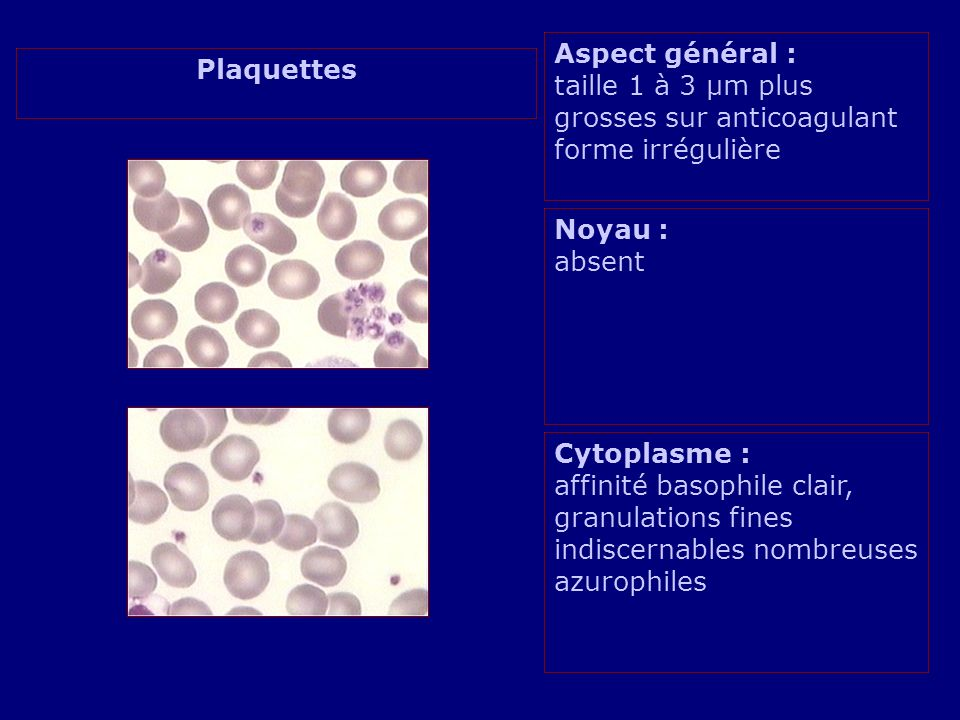 Aspect général : taille 1 à 3 µm plus grosses sur anticoagulant forme irrégulière Noyau : absent Cytoplasme : affinité basophile clair, granulations fines indiscernables nombreuses azurophiles Plaquettes