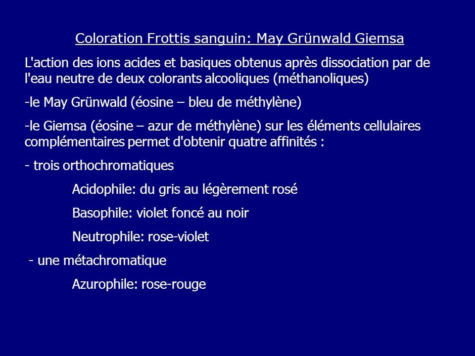 Coloration Frottis sanguin: May Grünwald Giemsa L action des ions acides et basiques obtenus après dissociation par de l eau neutre de deux colorants alcooliques (méthanoliques) -le May Grünwald (éosine – bleu de méthylène) -le Giemsa (éosine – azur de méthylène) sur les éléments cellulaires complémentaires permet d obtenir quatre affinités : - trois orthochromatiques Acidophile: du gris au légèrement rosé Basophile: violet foncé au noir Neutrophile: rose-violet - une métachromatique Azurophile: rose-rouge