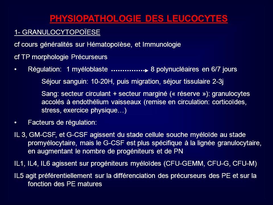 Evolution: même après traitement (INF ) et obtention dune ou plusieurs rémissions (10 à 20% des cas), conduit à phase de transformation en LA, hyperleucocytose et blastose sanguine (myéloblastes >10% et promyélo.) et médullaire (myéloblastes > 30%), amaigrissement, fièvre persistante, douleurs osseuses, fatale en qq mois surtout si chimiorésistance.