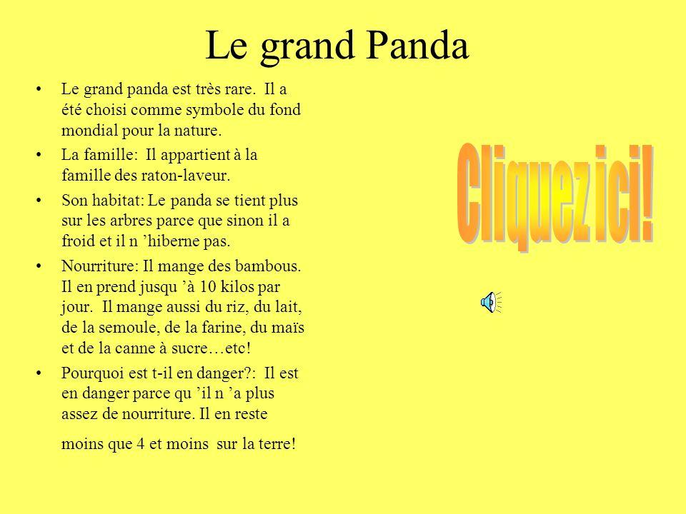 Le grand Panda Le grand panda est très rare.