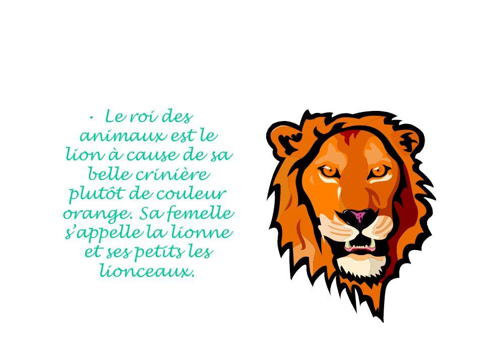 Le roi des animaux est le lion à cause de sa belle crinière plutôt de couleur orange. Sa femelle sappelle la lionne et ses petits les lionceaux.