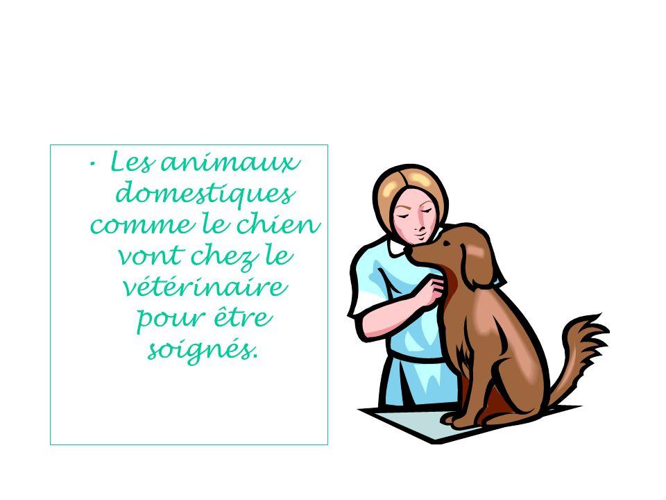 Les animaux domestiques comme le chien vont chez le vétérinaire pour être soignés.