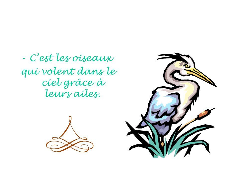 Cest les oiseaux qui volent dans le ciel grâce à leurs ailes.