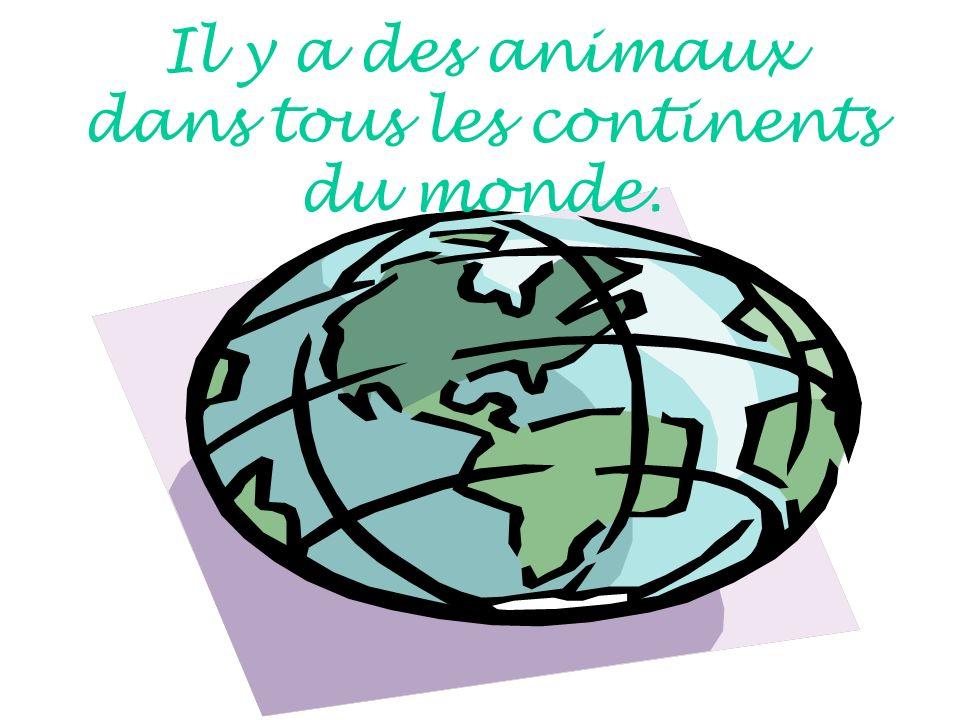 Il y a des animaux dans tous les continents du monde.