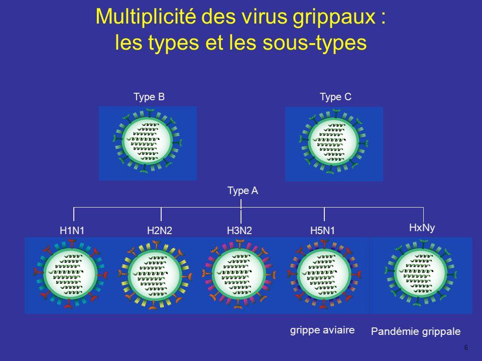 6 Multiplicité des virus grippaux : les types et les sous-types Type B H1N1H2N2H3N2H5N1 Type A Type C HxNy grippe aviaire Pandémie grippale