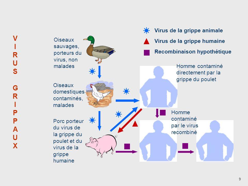 9 VIRUSGRIPPAUXVIRUSGRIPPAUX Homme contaminé par un autre homme Oiseaux sauvages, porteurs du virus, non malades Oiseaux domestiques contaminés, malad