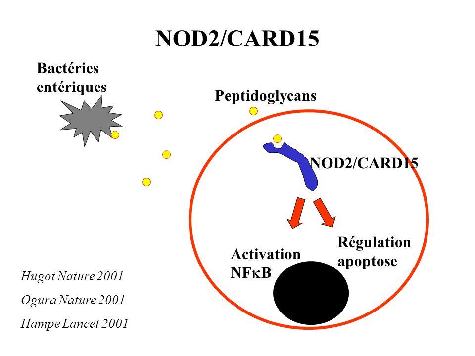NOD2/CARD15 Bactéries entériques Peptidoglycans Activation NF B Régulation apoptose Hugot Nature 2001 Ogura Nature 2001 Hampe Lancet 2001