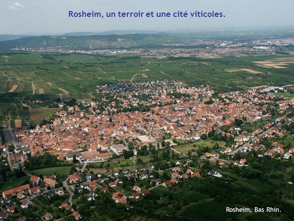 Rosheim, Bas Rhin. Rosheim, un terroir et une cité viticoles.