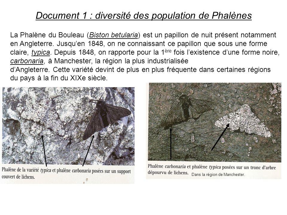 Document 1 : diversité des population de Phalènes Dans la région de Manchester. La Phalène du Bouleau (Biston betularia) est un papillon de nuit prése