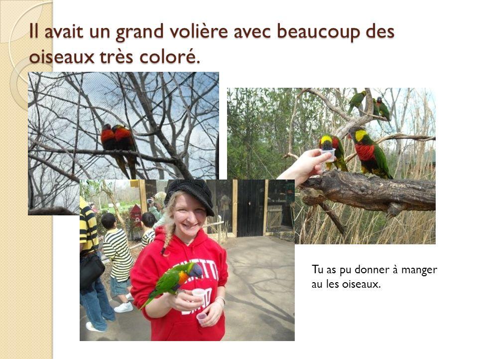 Il avait un grand volière avec beaucoup des oiseaux très coloré.