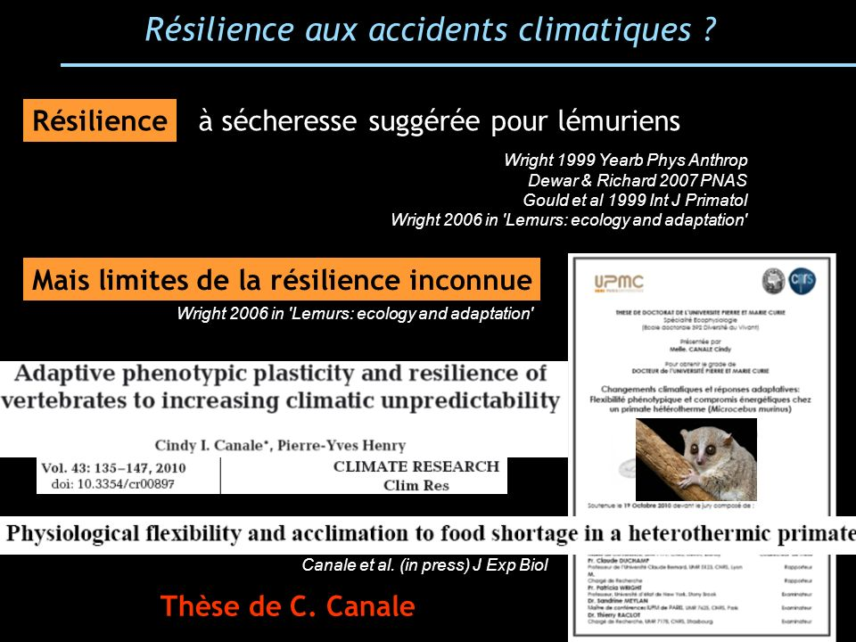 Résilience aux accidents climatiques ? à sécheresse suggérée pour lémuriens Wright 1999 Yearb Phys Anthrop Dewar & Richard 2007 PNAS Gould et al 1999