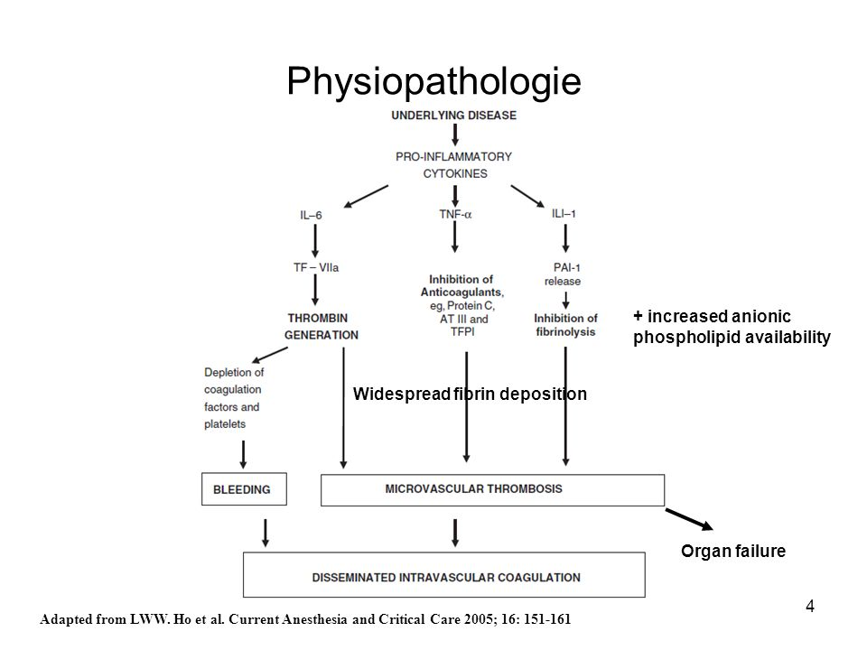 4 Physiopathologie Adapted from LWW. Ho et al. Current Anesthesia and Critical Care 2005; 16: 151-161 + increased anionic phospholipid availability Wi