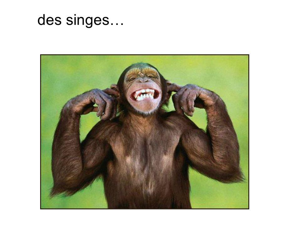 des singes…