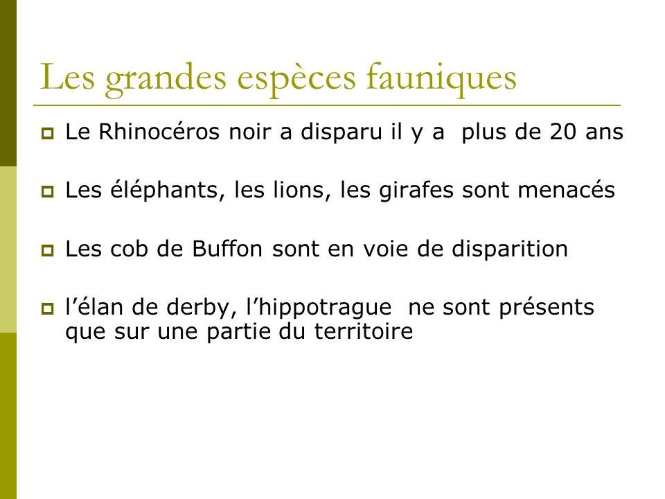Les grandes espèces fauniques Le Rhinocéros noir a disparu il y a plus de 20 ans Les éléphants, les lions, les girafes sont menacés Les cob de Buffon sont en voie de disparition lélan de derby, lhippotrague ne sont présents que sur une partie du territoire