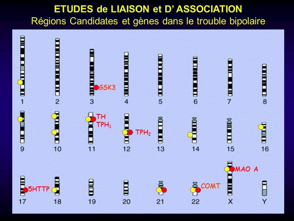 ETUDES de LIAISON et D ASSOCIATION Régions Candidates et gènes dans le trouble bipolaire TH TPH 1 5HTTP MAO A COMT TPH 2 GSK3