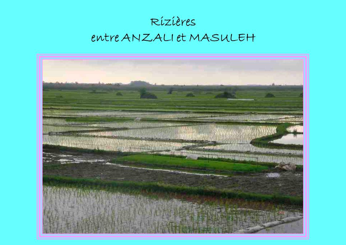 Rizières entre ANZALI et MASULEH