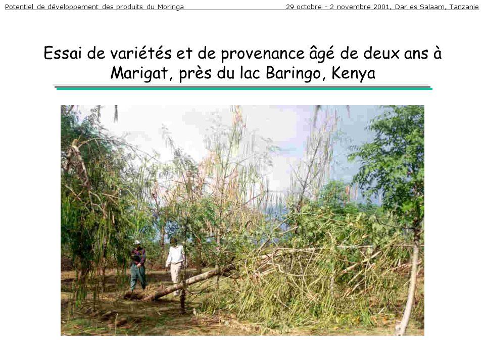 Essai de variétés et de provenance âgé de deux ans à Marigat, près du lac Baringo, Kenya Potentiel de développement des produits du Moringa 29 octobre