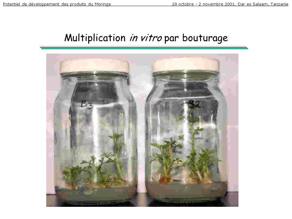Multiplication in vitro par bouturage Potentiel de développement des produits du Moringa 29 octobre - 2 novembre 2001, Dar es Salaam, Tanzanie