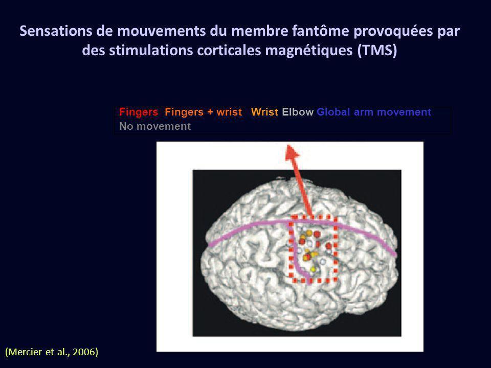 (Mercier et al., 2006) Sensations de mouvements du membre fantôme provoquées par des stimulations corticales magnétiques (TMS) Fingers Fingers + wrist