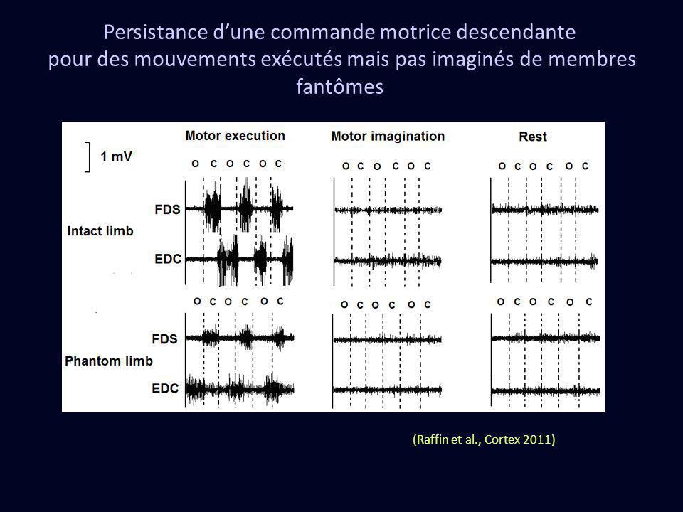 Persistance dune commande motrice descendante pour des mouvements exécutés mais pas imaginés de membres fantômes (Raffin et al., Cortex 2011)
