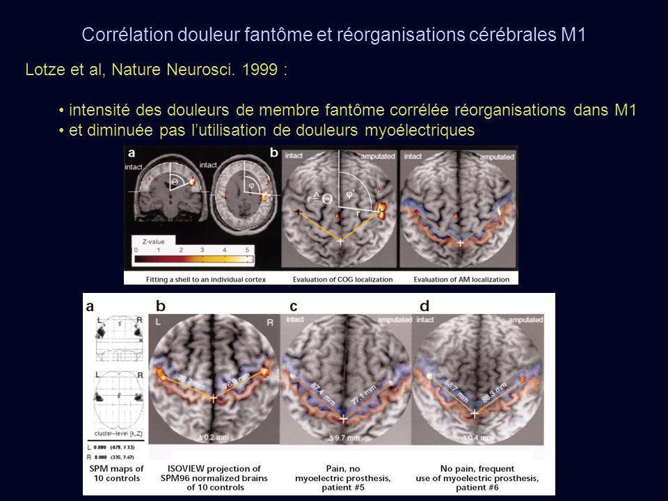 Lotze et al, Nature Neurosci. 1999 : intensité des douleurs de membre fantôme corrélée réorganisations dans M1 et diminuée pas lutilisation de douleur
