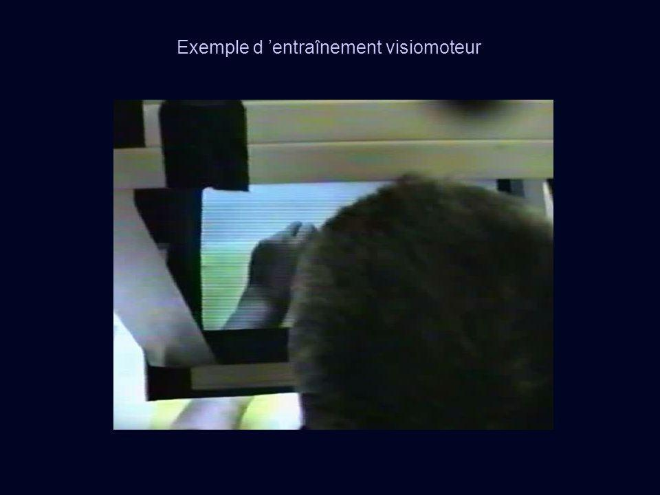 Exemple d entraînement visiomoteur
