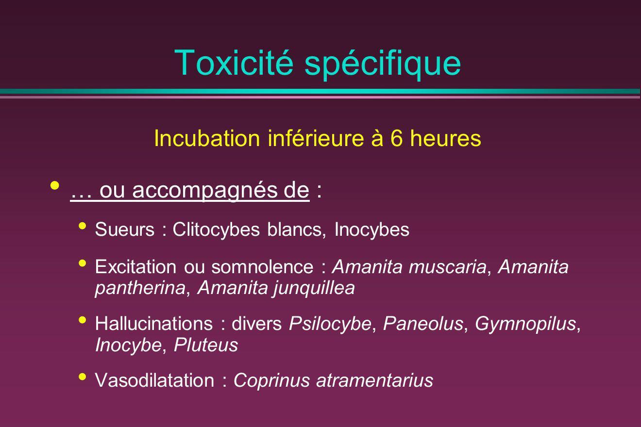 Toxicité spécifique Incubation inférieure à 6 heures … ou accompagnés de : Sueurs : Clitocybes blancs, Inocybes Excitation ou somnolence : Amanita mus