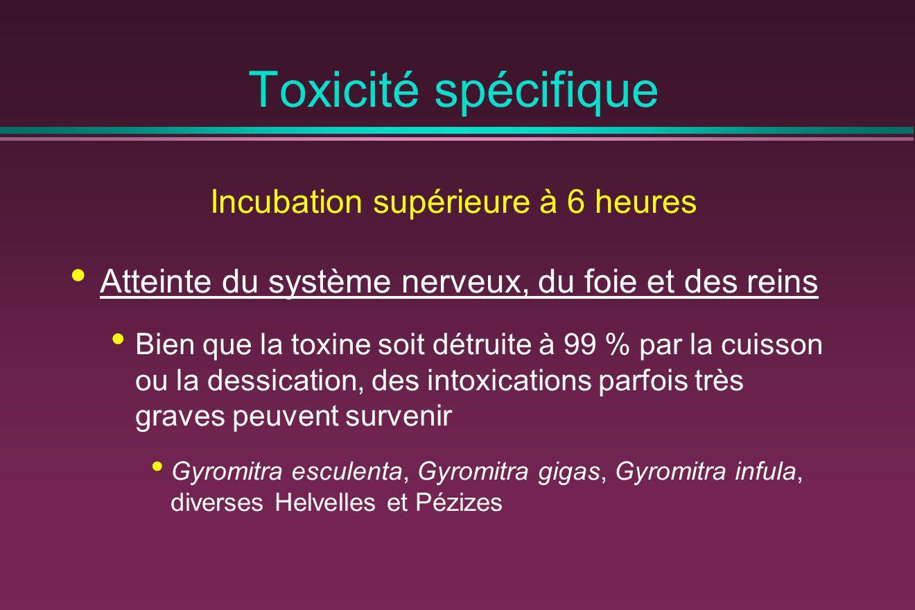 Toxicité spécifique Incubation supérieure à 6 heures Atteinte du système nerveux, du foie et des reins Bien que la toxine soit détruite à 99 % par la