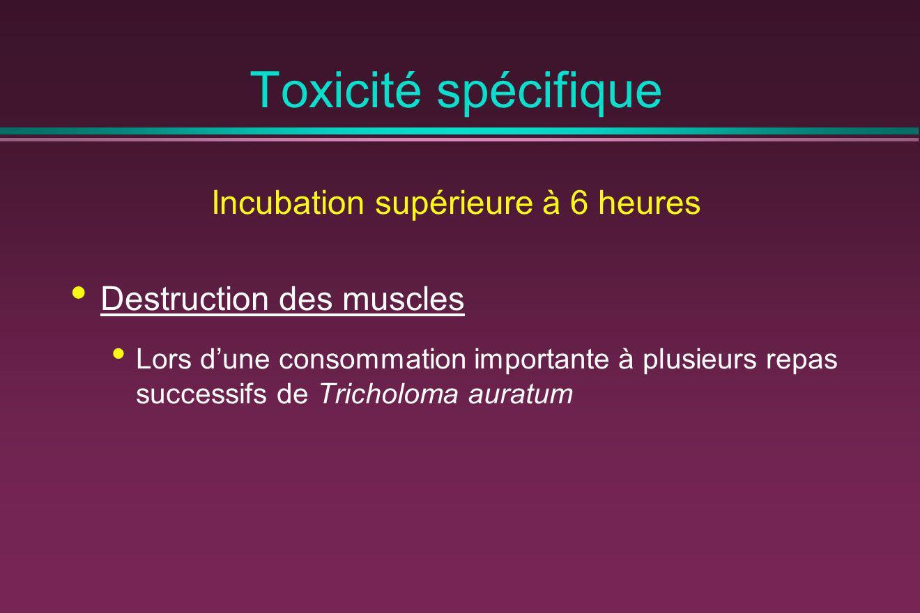 Toxicité spécifique Incubation supérieure à 6 heures Destruction des muscles Lors dune consommation importante à plusieurs repas successifs de Trichol