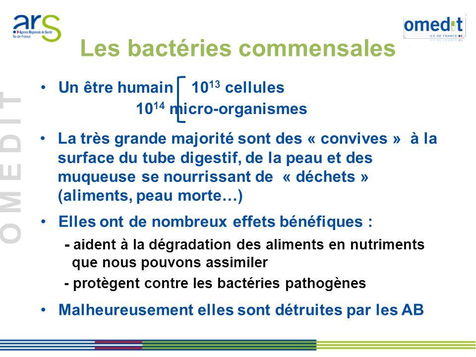 O M E D I T Un être humain 10 13 cellules 10 14 micro-organismes Les bactéries commensales La très grande majorité sont des « convives » à la surface du tube digestif, de la peau et des muqueuse se nourrissant de « déchets » (aliments, peau morte…) Elles ont de nombreux effets bénéfiques : - aident à la dégradation des aliments en nutriments que nous pouvons assimiler - protègent contre les bactéries pathogènes Malheureusement elles sont détruites par les AB