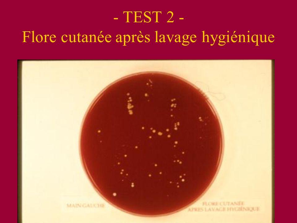 - TEST 2 - Flore cutanée après lavage hygiénique