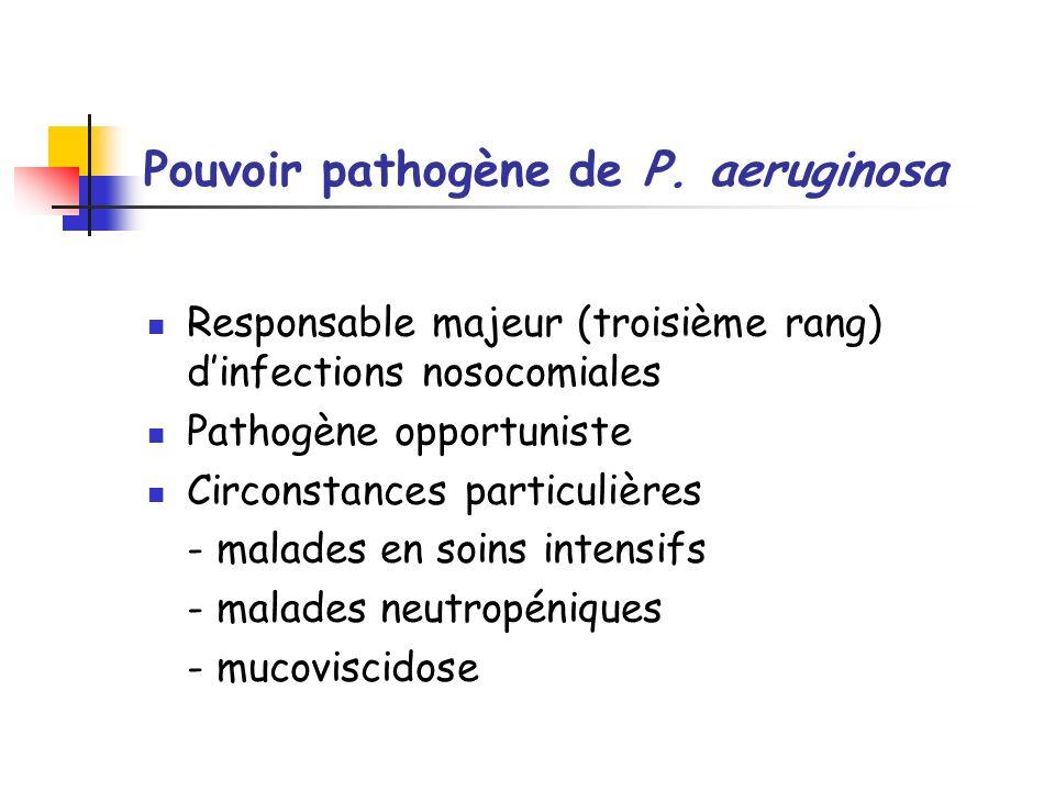 Pouvoir pathogène de P. aeruginosa Responsable majeur (troisième rang) dinfections nosocomiales Pathogène opportuniste Circonstances particulières - m