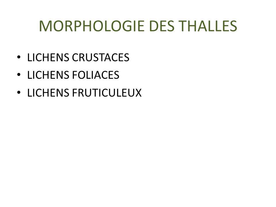 MORPHOLOGIE DES THALLES LICHENS CRUSTACES LICHENS FOLIACES LICHENS FRUTICULEUX