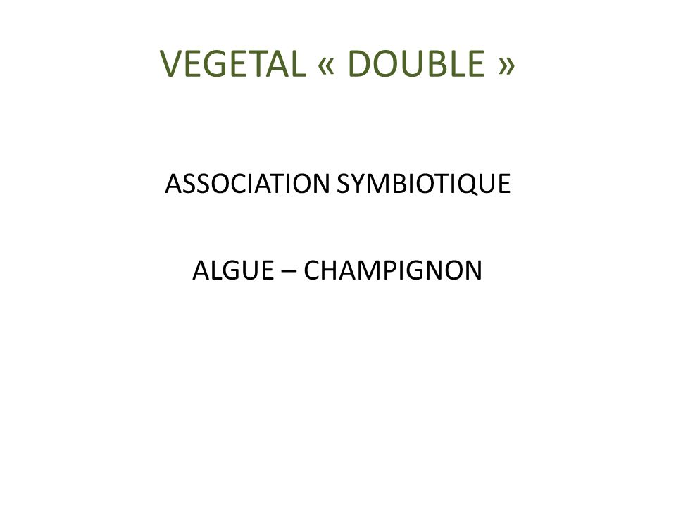 VEGETAL « DOUBLE » ASSOCIATION SYMBIOTIQUE ALGUE – CHAMPIGNON