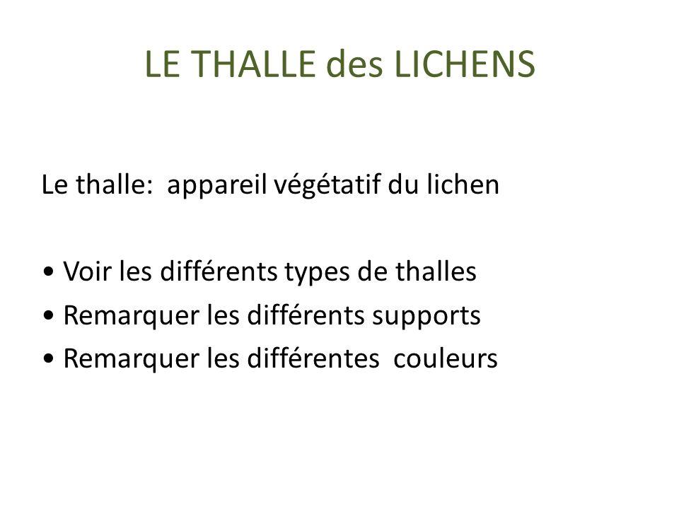 LE THALLE des LICHENS Le thalle: appareil végétatif du lichen Voir les différents types de thalles Remarquer les différents supports Remarquer les différentes couleurs