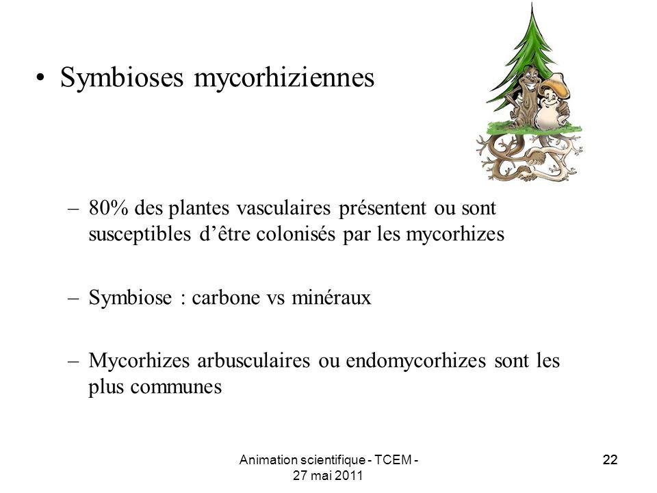22 Animation scientifique - TCEM - 27 mai 2011 22 Symbioses mycorhiziennes –80% des plantes vasculaires présentent ou sont susceptibles dêtre colonisé