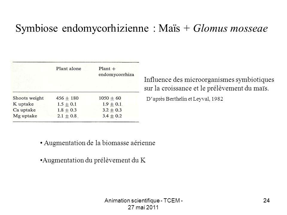 24 Symbiose endomycorhizienne : Maïs + Glomus mosseae Daprès Berthelin et Leyval, 1982 Influence des microorganismes symbiotiques sur la croissance et
