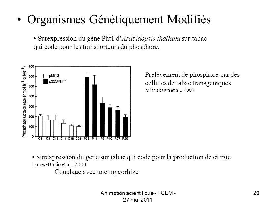 29 Animation scientifique - TCEM - 27 mai 2011 29 Organismes Génétiquement Modifiés Surexpression du gène sur tabac qui code pour la production de cit