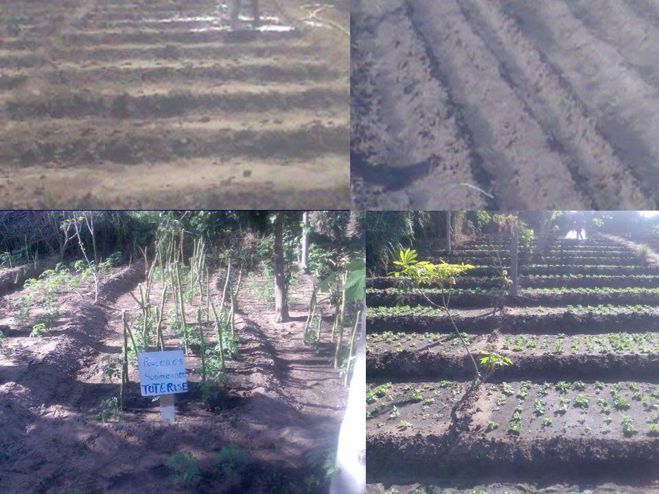 Autres Réalisations Mise en place dun systèmes dassainissement semi collectif et dune station dépuration extensive des eaux usées pour leur réutilisation dans lagriculture urbaine à Rufisque.