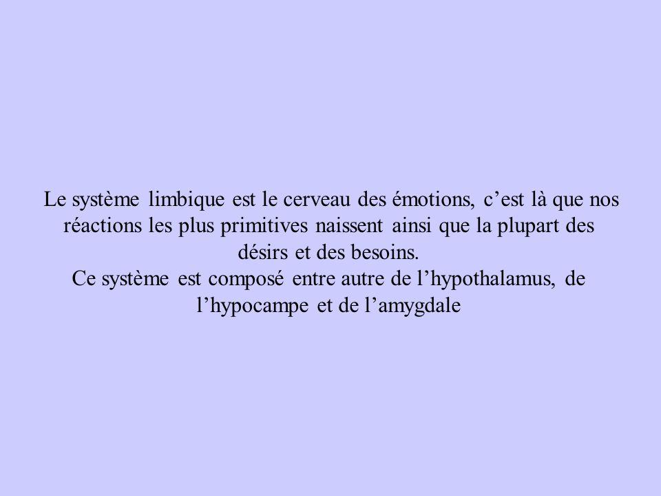 Le système limbique est le cerveau des émotions, cest là que nos réactions les plus primitives naissent ainsi que la plupart des désirs et des besoins