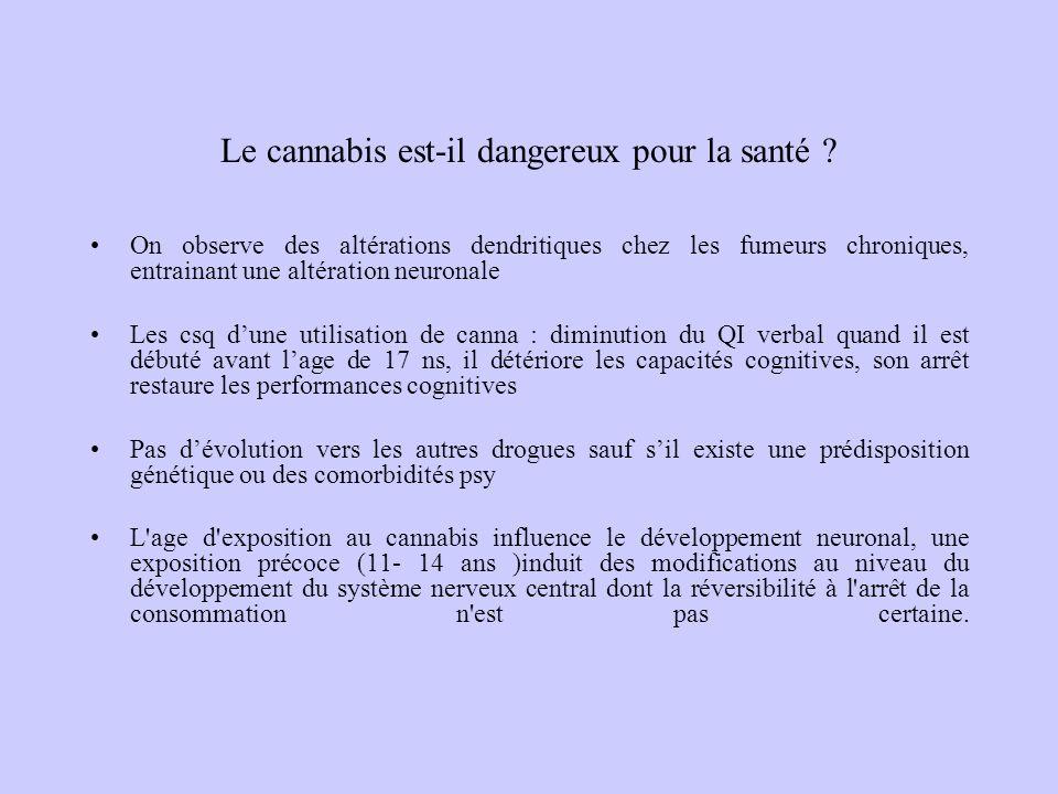 Le cannabis est-il dangereux pour la santé ? On observe des altérations dendritiques chez les fumeurs chroniques, entrainant une altération neuronale