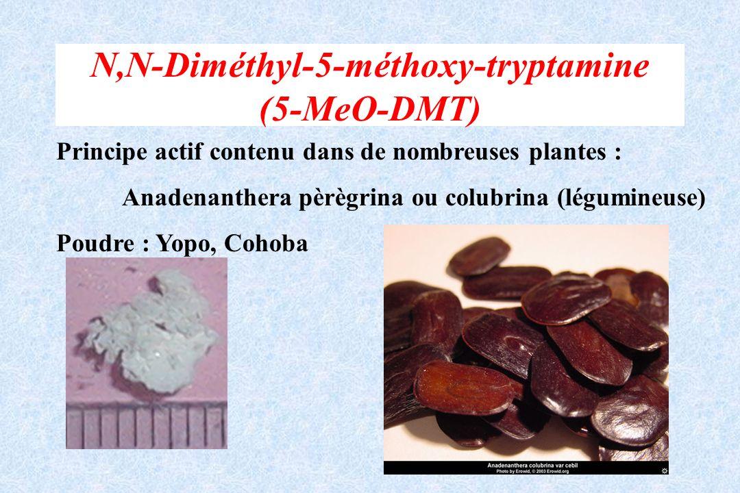 N,N-Diméthyl-5-méthoxy-tryptamine (5-MeO-DMT) Principe actif contenu dans de nombreuses plantes : Anadenanthera pèrègrina ou colubrina (légumineuse) P
